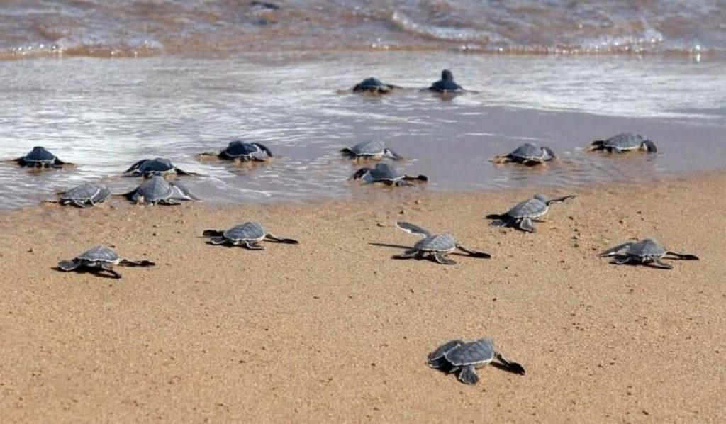 Лучшие пляжи Кипра: Пляж Лара