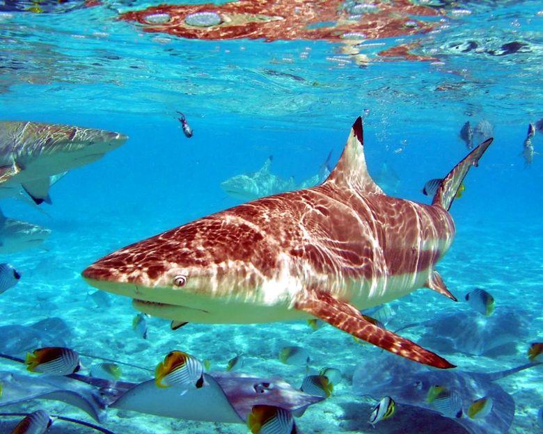 Животные Кипра: акулы
