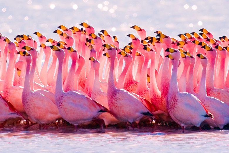 Животные Кипра: розовый фламинго