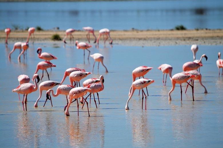 Изображение Соленого озера в Ларнаке. Блог ProCyprus